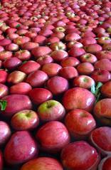 Producteurs de fruits et légumes